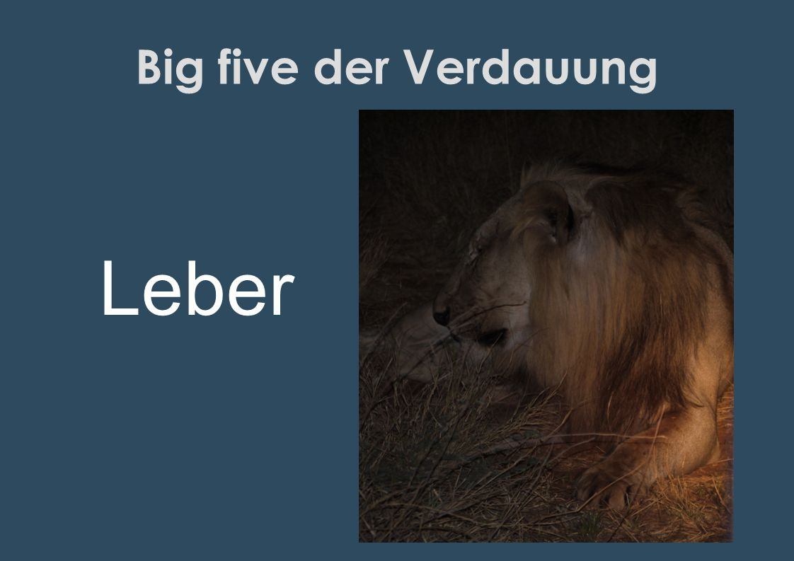 Big five der Verdauung Leber
