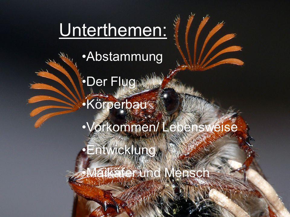 Unterthemen: Abstammung Der Flug Körperbau Vorkommen/ Lebensweise