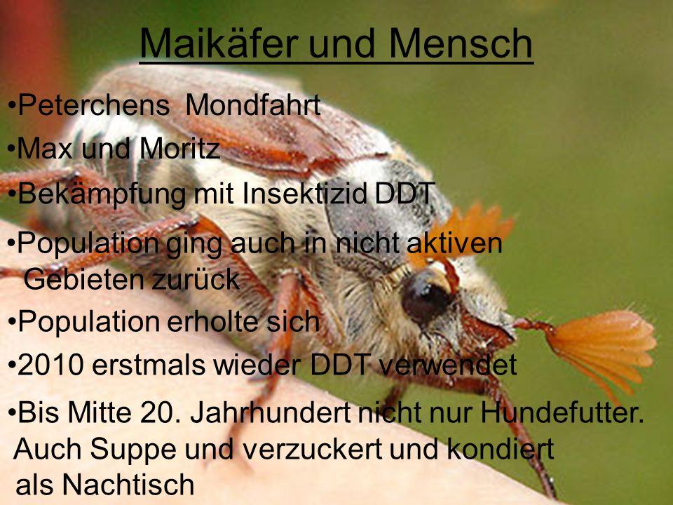 Maikäfer und Mensch Peterchens Mondfahrt Max und Moritz