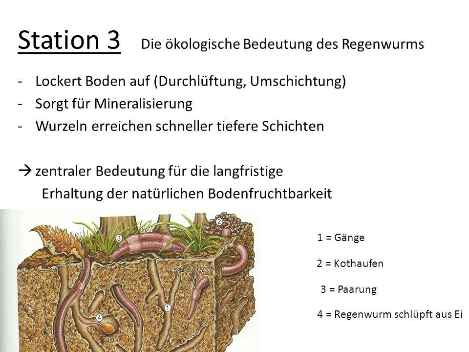 Station 3 Die ökologische Bedeutung des Regenwurms