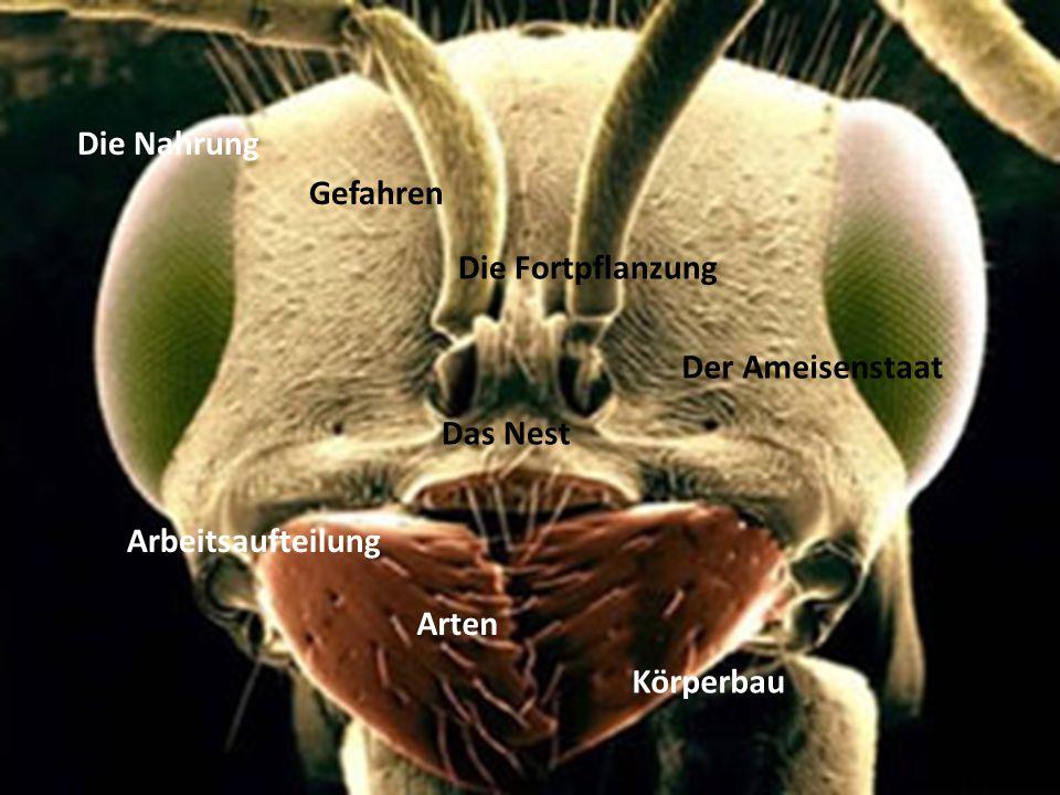 Die Nahrung Gefahren Die Fortpflanzung Der Ameisenstaat Das Nest