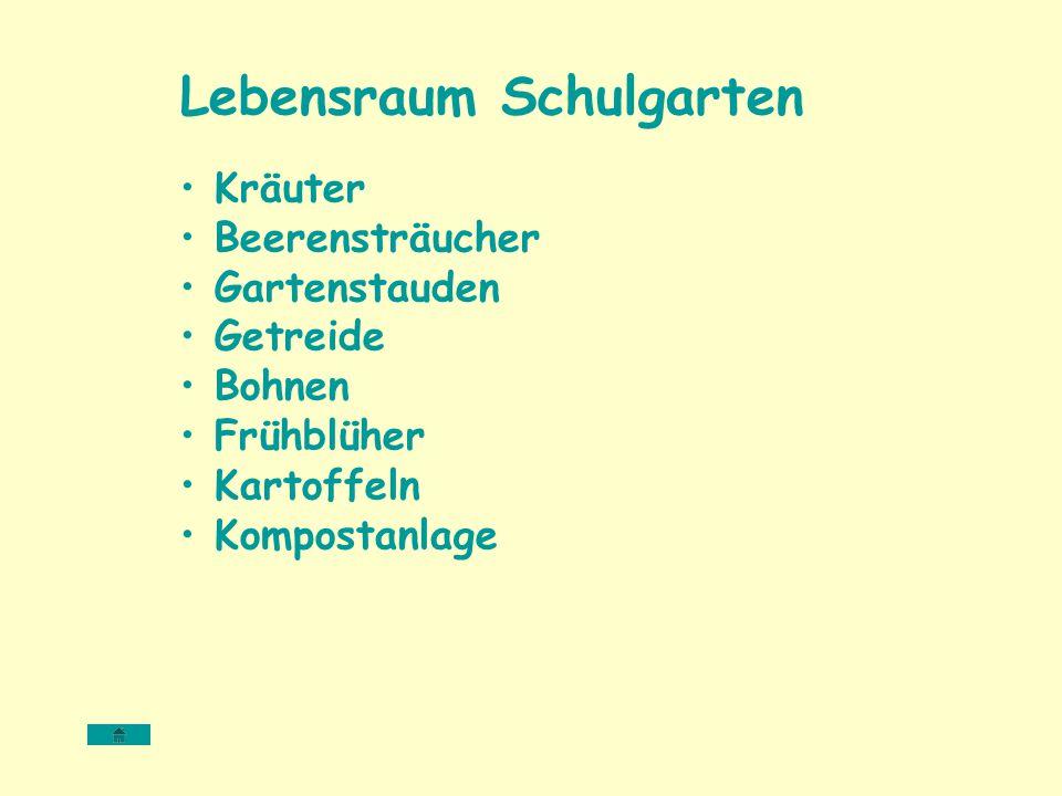 Lebensraum Schulgarten