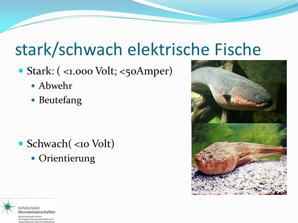 stark/schwach elektrische Fische
