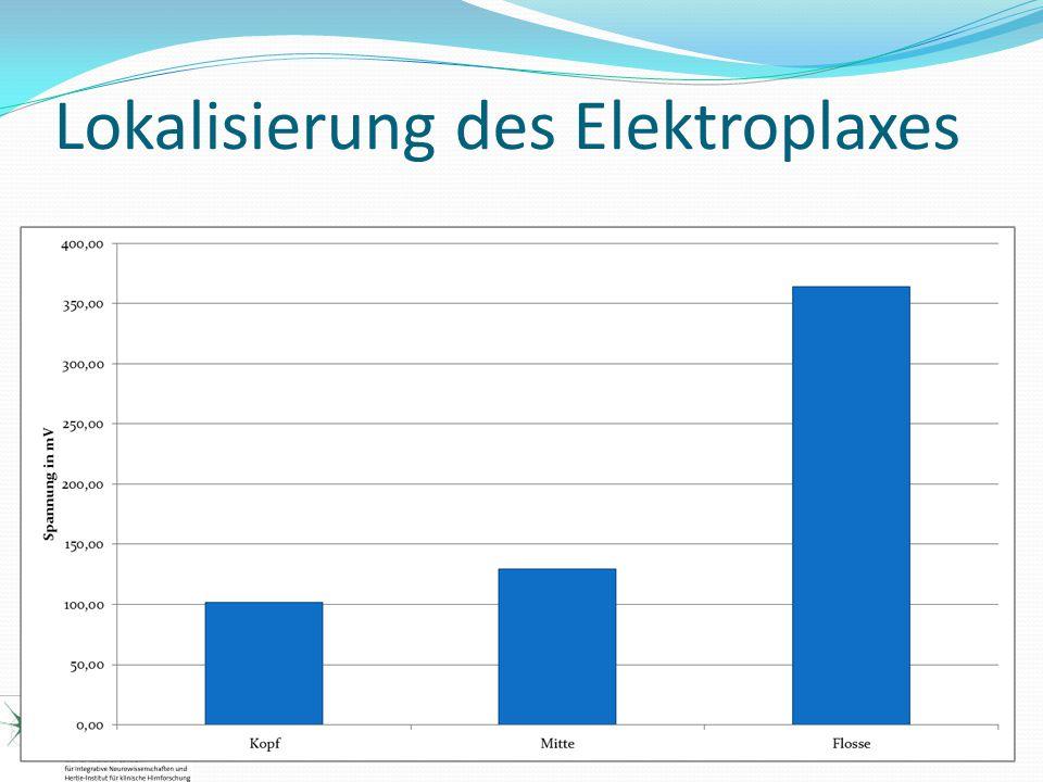 Lokalisierung des Elektroplaxes