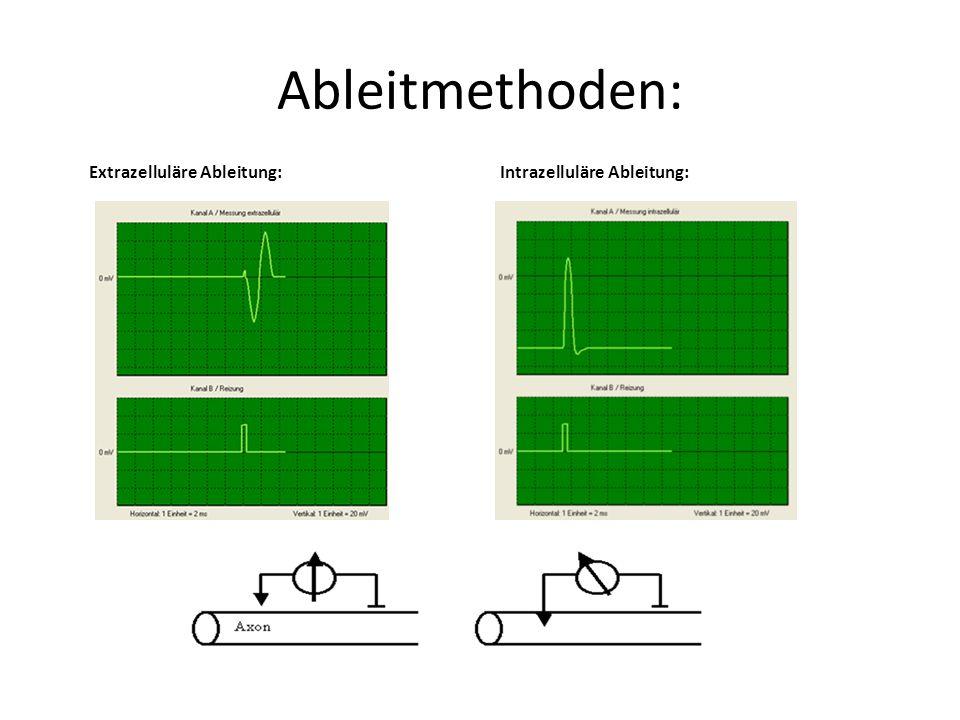 Ableitmethoden: Extrazelluläre Ableitung: Intrazelluläre Ableitung: