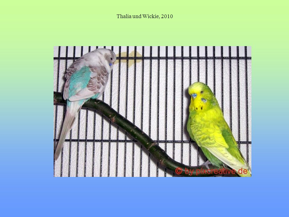 Thalia und Wickie, 2010