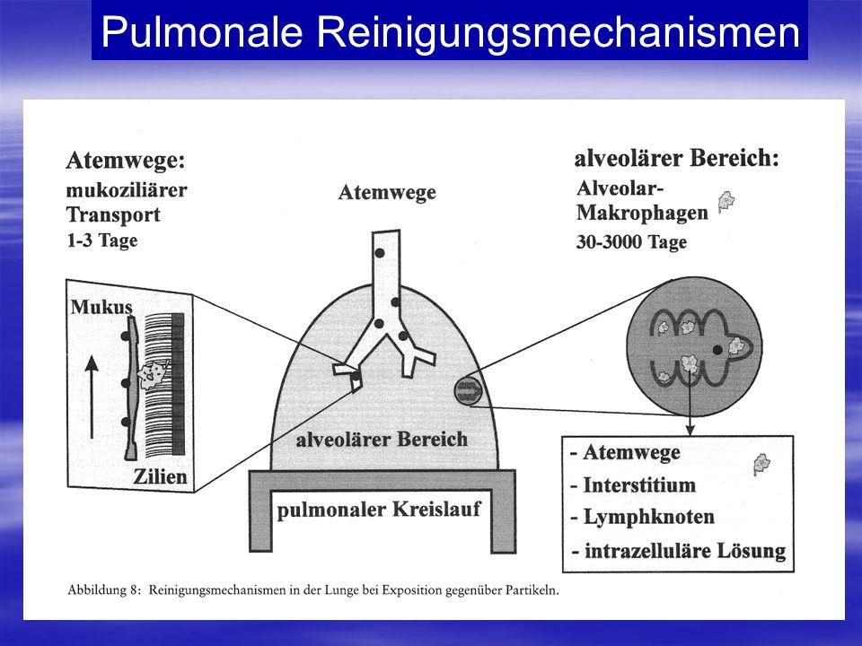 Pulmonale Reinigungsmechanismen