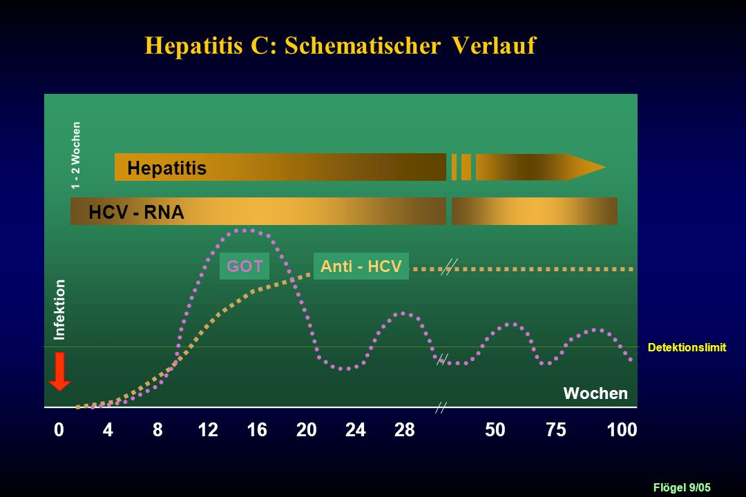 Hepatitis C: Schematischer Verlauf