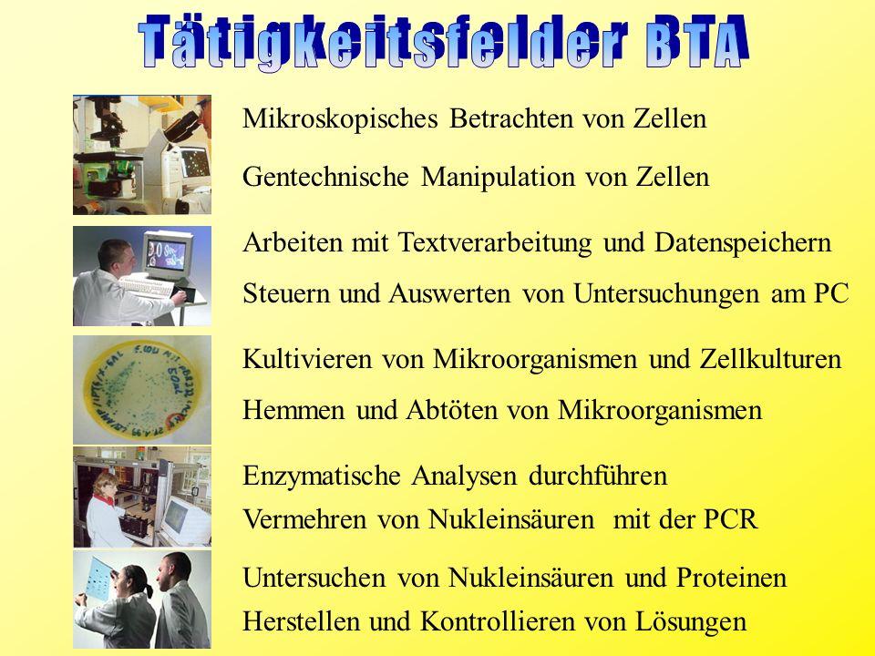 Tätigkeitsfelder BTA Mikroskopisches Betrachten von Zellen
