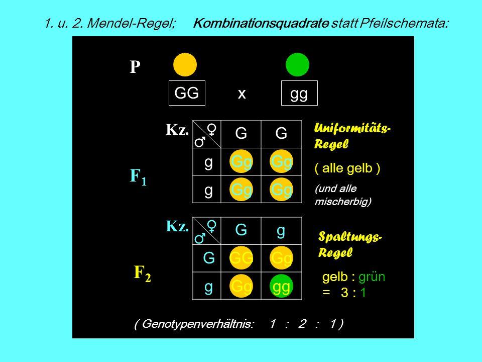 1. u. 2. Mendel-Regel; Kombinationsquadrate statt Pfeilschemata: