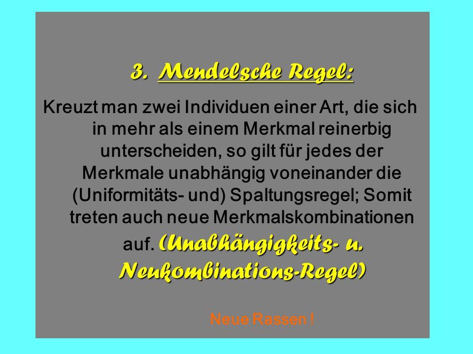Die 3. Mendelsche Regel (2)