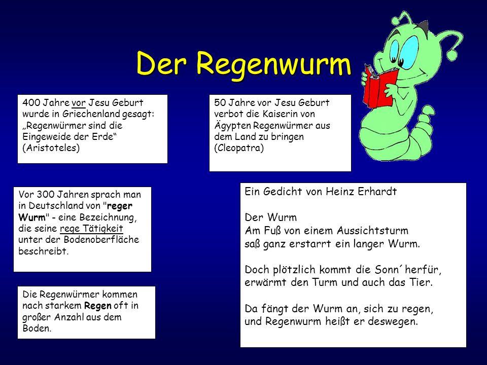 Der Regenwurm Ein Gedicht von Heinz Erhardt Der Wurm