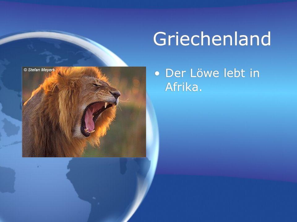 Griechenland Der Löwe lebt in Afrika.