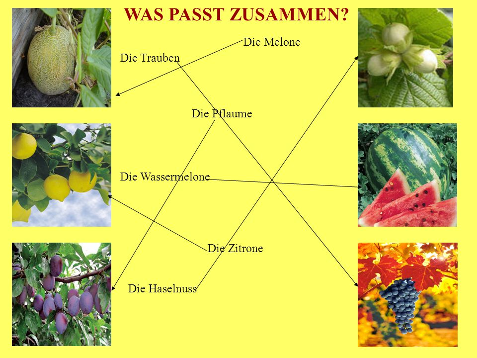WAS PASST ZUSAMMEN Die Melone Die Trauben Die Pflaume