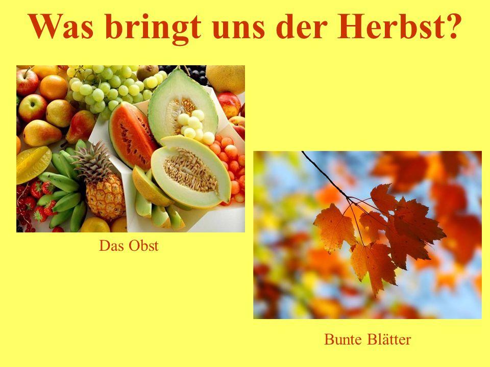 Was bringt uns der Herbst