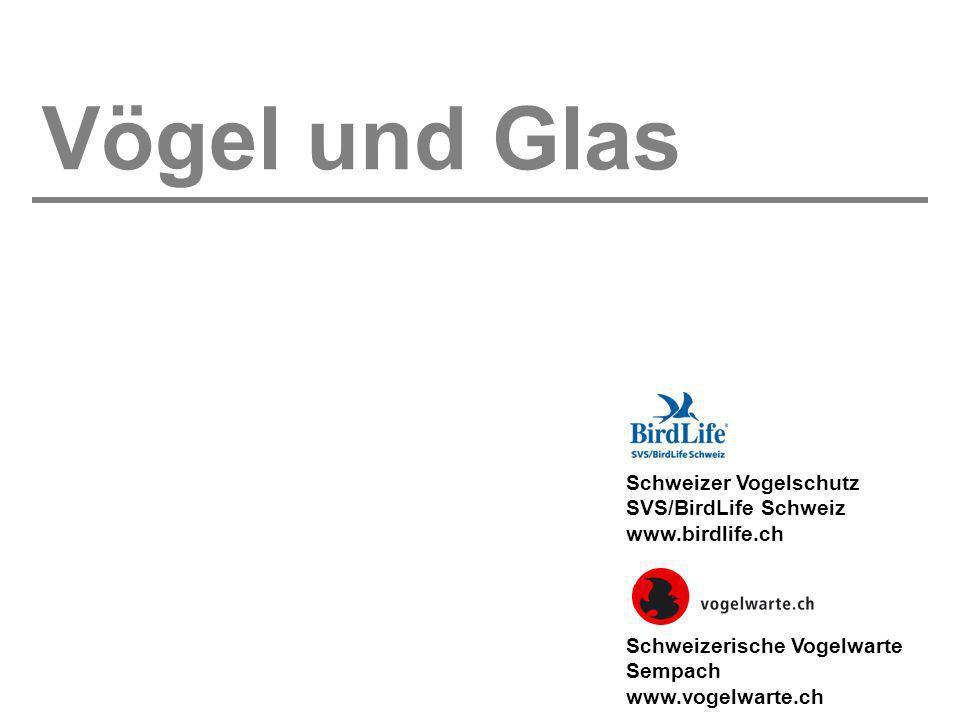 Vögel und Glas Schweizer Vogelschutz SVS/BirdLife Schweiz