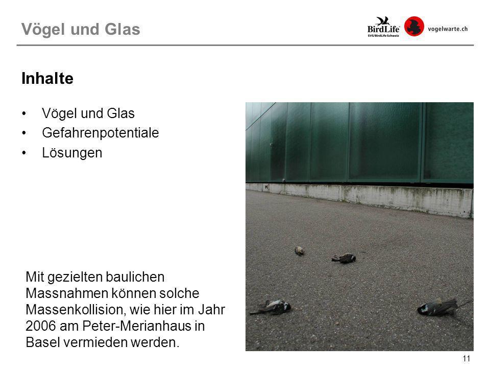 Vögel und Glas Inhalte Vögel und Glas Gefahrenpotentiale Lösungen