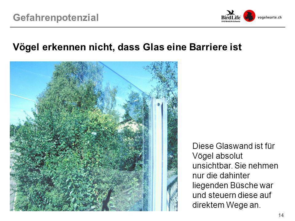 Vögel erkennen nicht, dass Glas eine Barriere ist