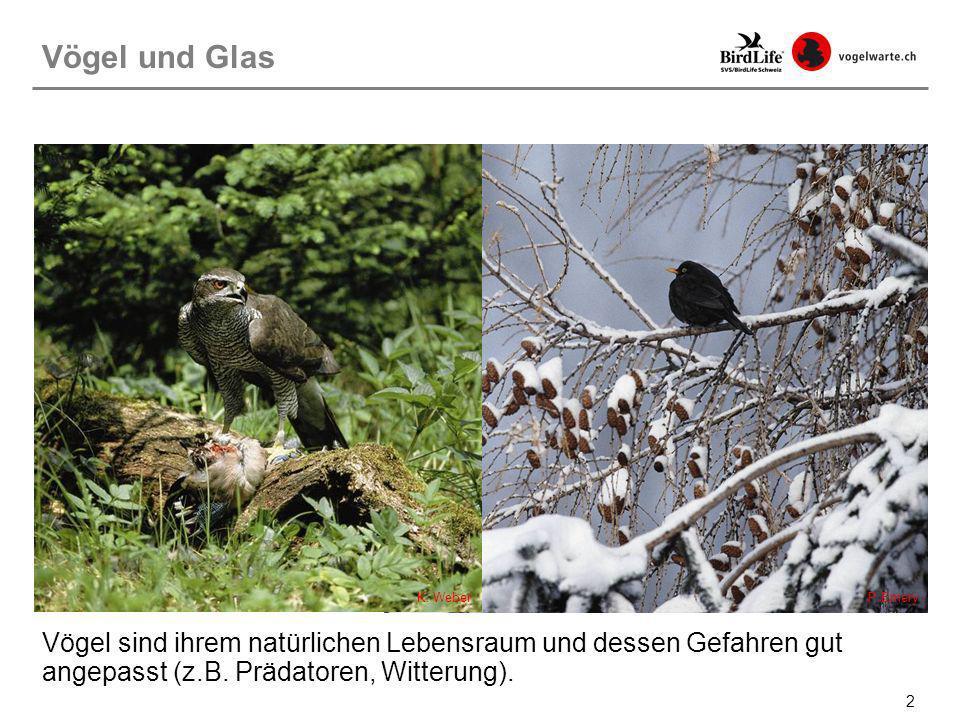 Vögel und GlasK.Weber. P.Emery.