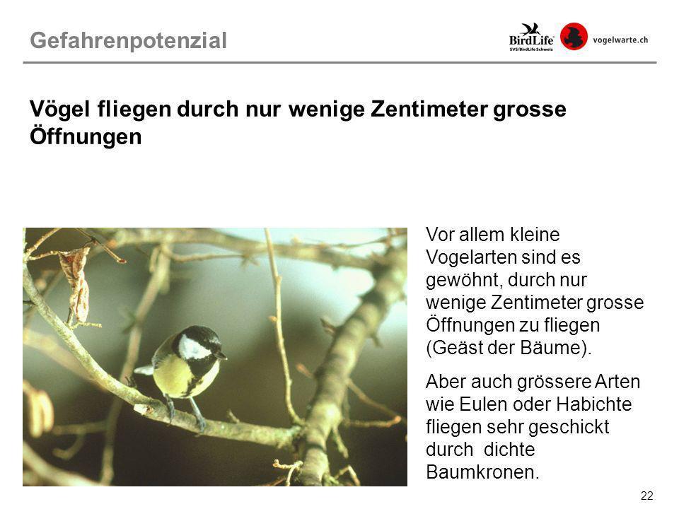 Vögel fliegen durch nur wenige Zentimeter grosse Öffnungen