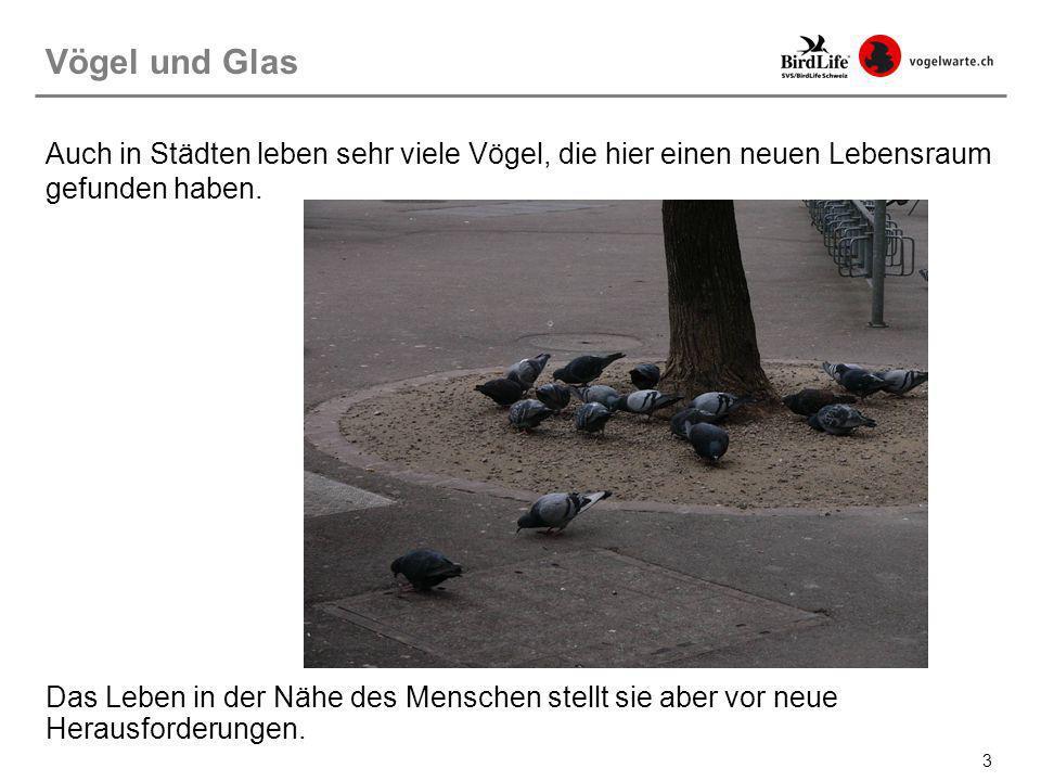 Vögel und Glas Auch in Städten leben sehr viele Vögel, die hier einen neuen Lebensraum gefunden haben.