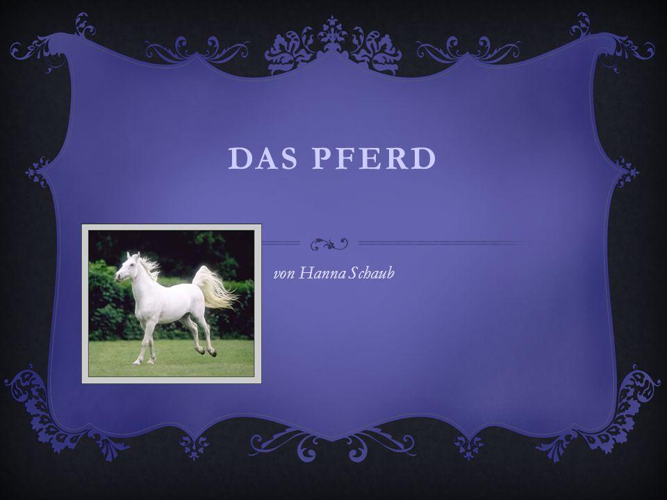 Das Pferd von Hanna Schaub