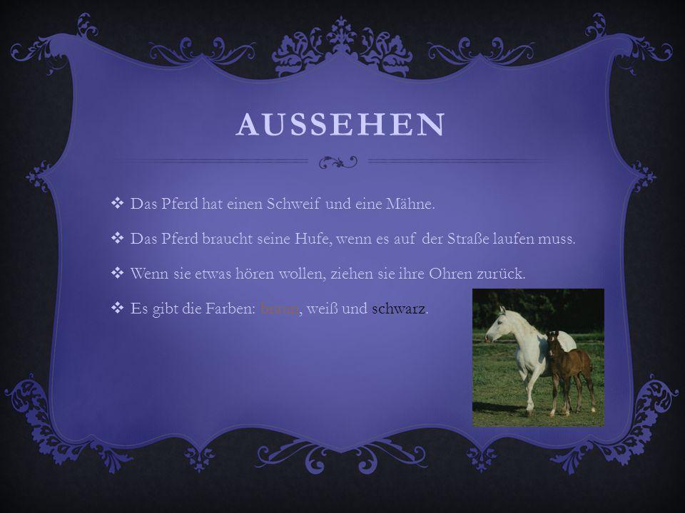 Aussehen Das Pferd hat einen Schweif und eine Mähne.