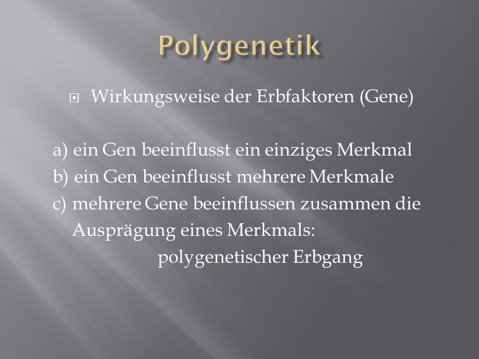 Polygenetik Wirkungsweise der Erbfaktoren (Gene)