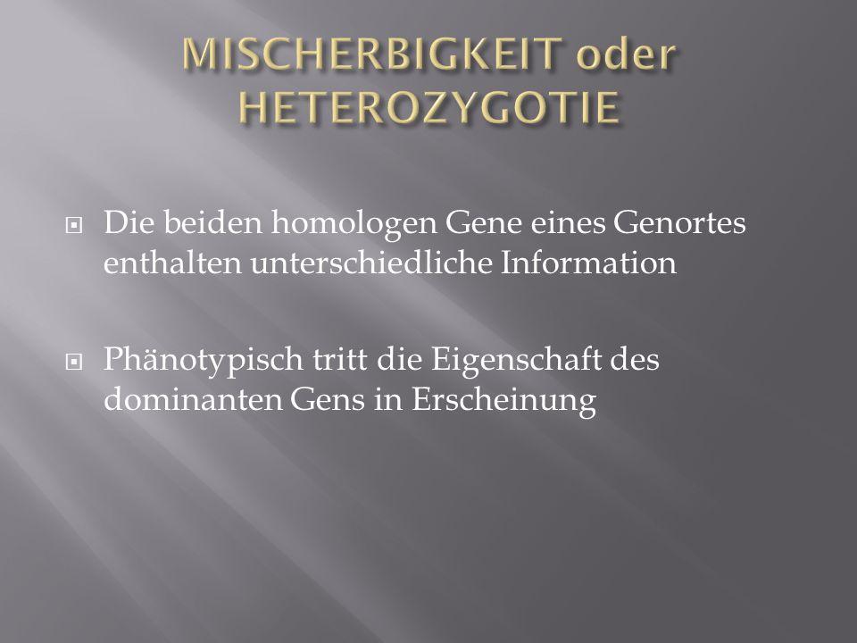 MISCHERBIGKEIT oder HETEROZYGOTIE