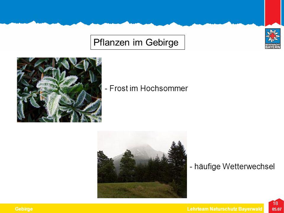 Pflanzen im Gebirge - Frost im Hochsommer - häufige Wetterwechsel
