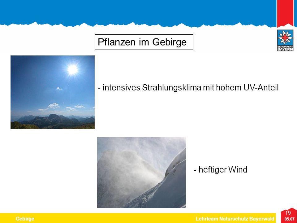 Pflanzen im Gebirge - intensives Strahlungsklima mit hohem UV-Anteil