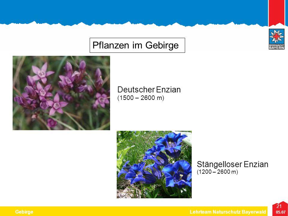 Pflanzen im Gebirge Deutscher Enzian Stängelloser Enzian