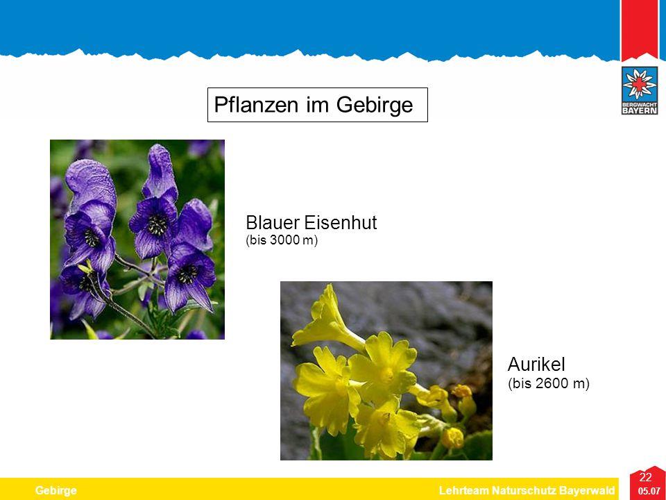 Pflanzen im Gebirge Blauer Eisenhut (bis 3000 m) Aurikel (bis 2600 m)