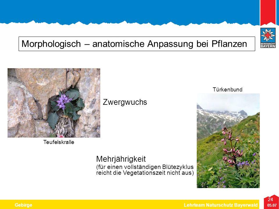 GEBIRGE Morphologisch – anatomische Anpassung bei Pflanzen Zwergwuchs