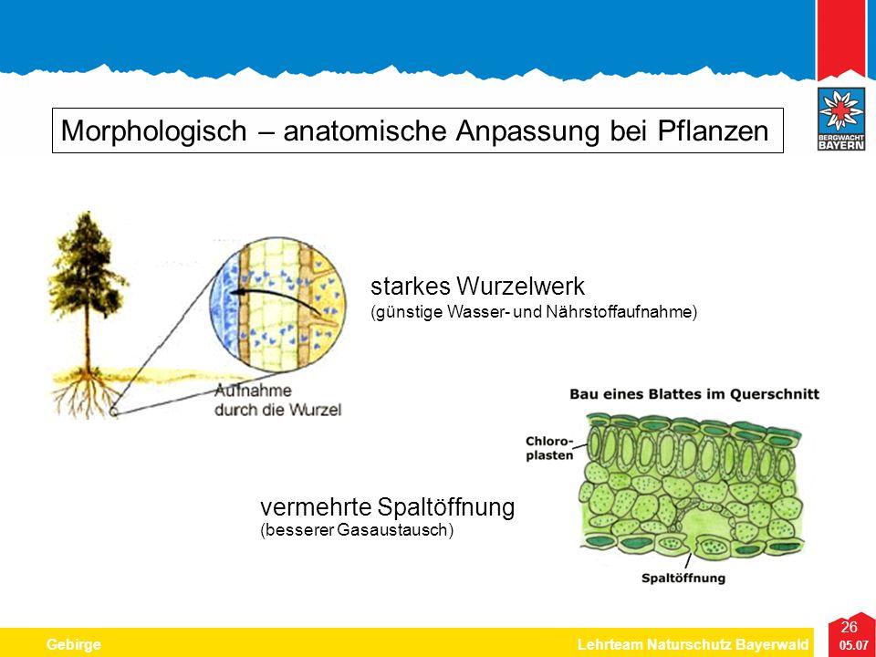 Morphologisch – anatomische Anpassung bei Pflanzen
