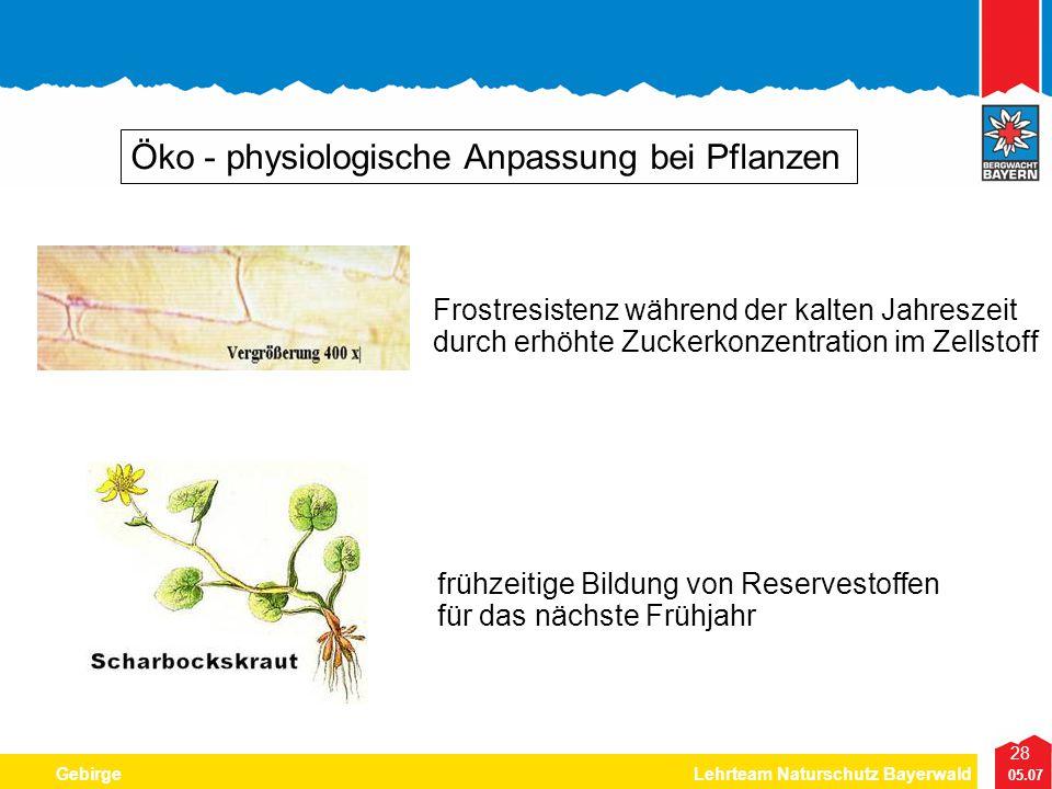 Öko - physiologische Anpassung bei Pflanzen