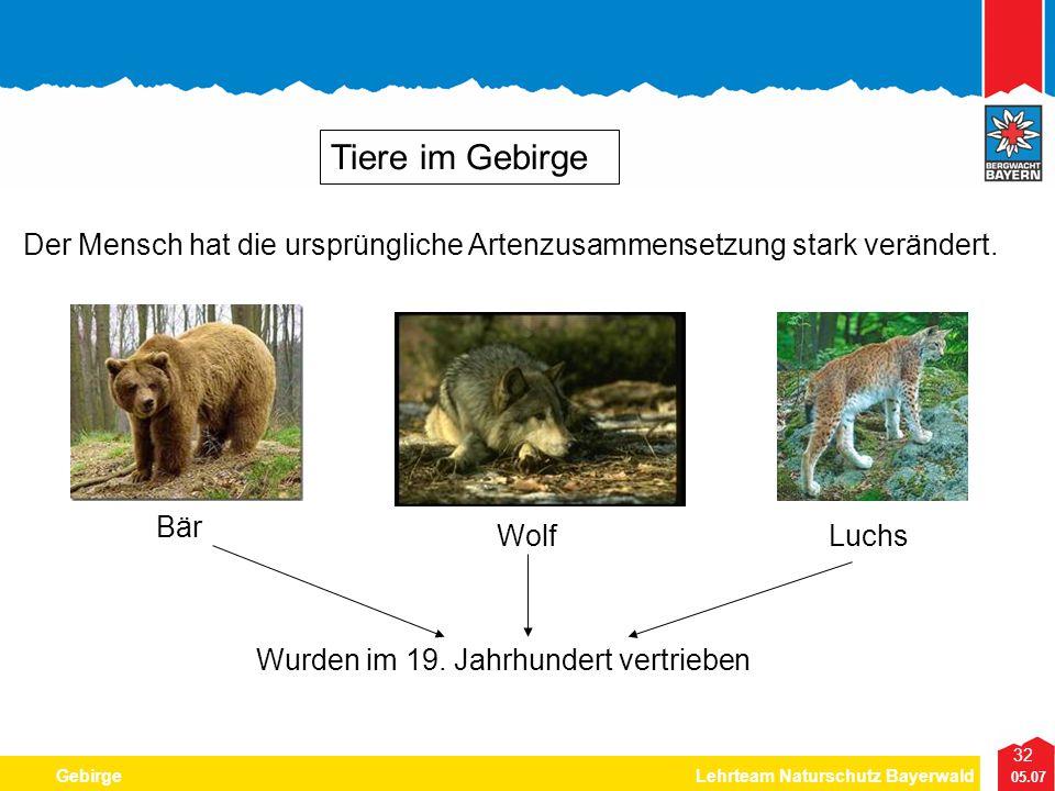 Tiere im Gebirge Der Mensch hat die ursprüngliche Artenzusammensetzung stark verändert. Bär. Wolf.