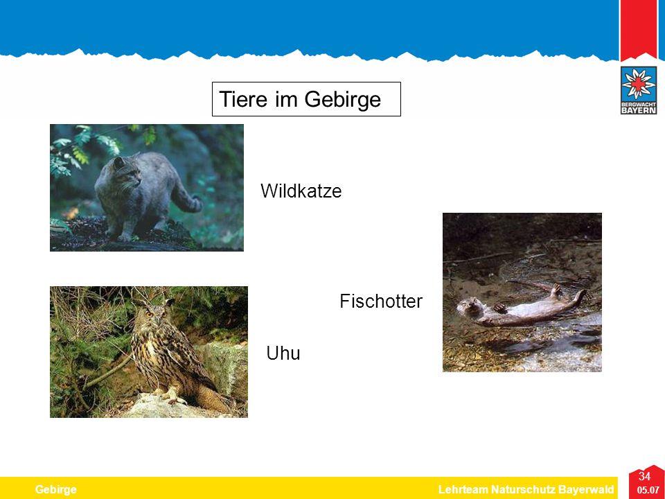Tiere im Gebirge Wildkatze Fischotter Uhu