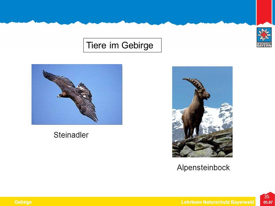 Tiere im Gebirge Steinadler Alpensteinbock