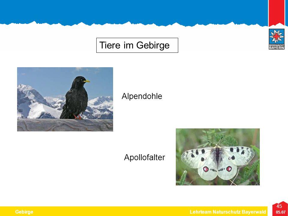 Tiere im Gebirge Alpendohle Apollofalter