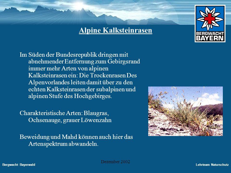 Alpine Kalksteinrasen