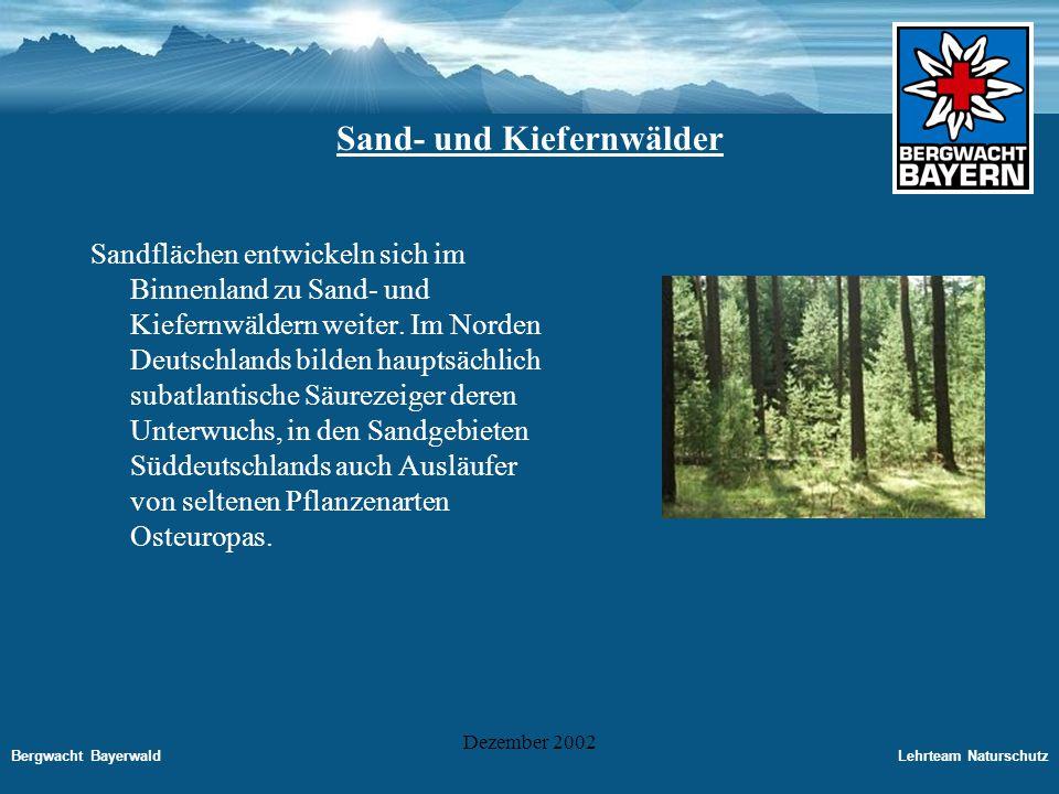 Sand- und Kiefernwälder