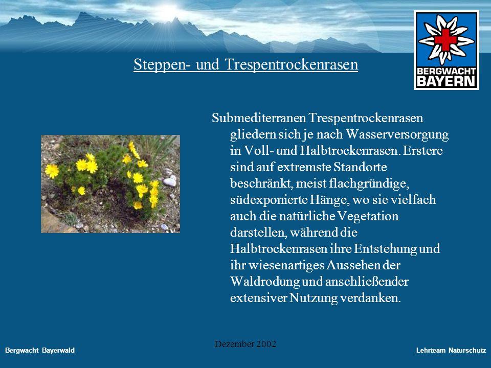 Steppen- und Trespentrockenrasen