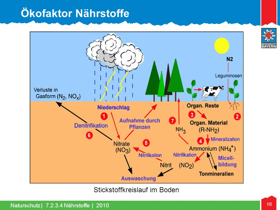Ökofaktor Nährstoffe Stickstoffkreislauf im Boden