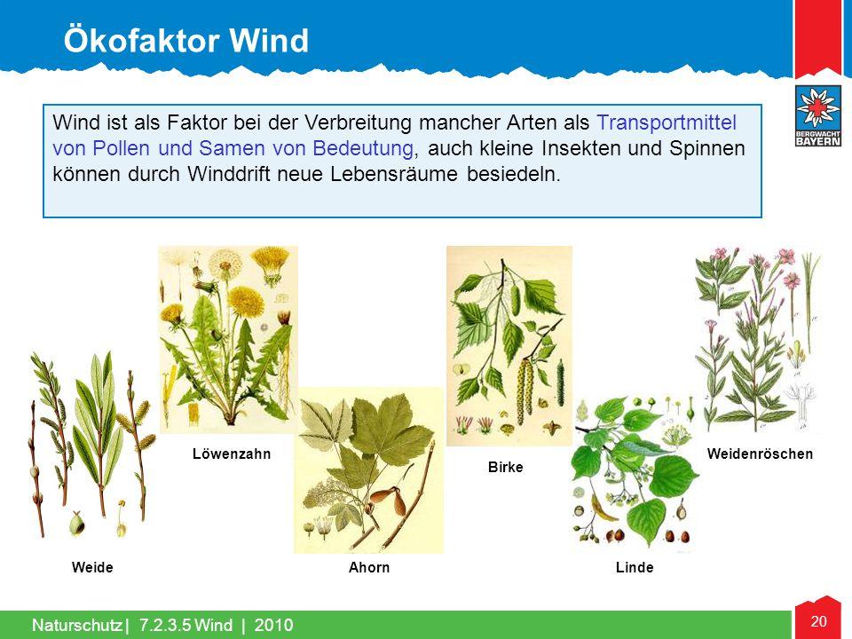 Ökofaktor Wind