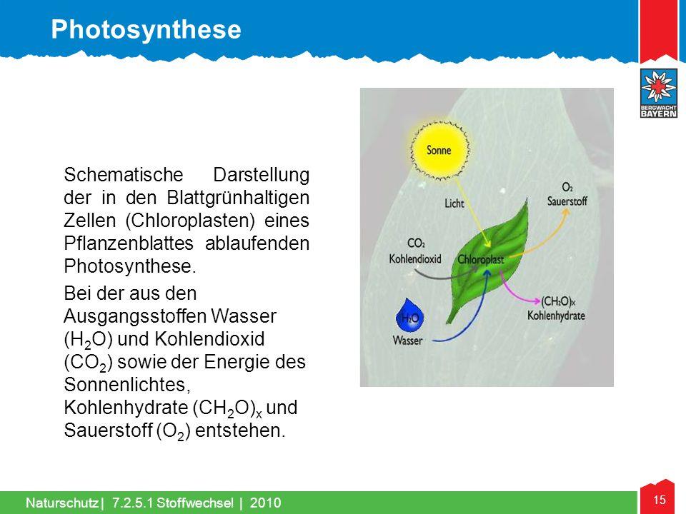 Photosynthese Schematische Darstellung der in den Blattgrünhaltigen Zellen (Chloroplasten) eines Pflanzenblattes ablaufenden Photosynthese.