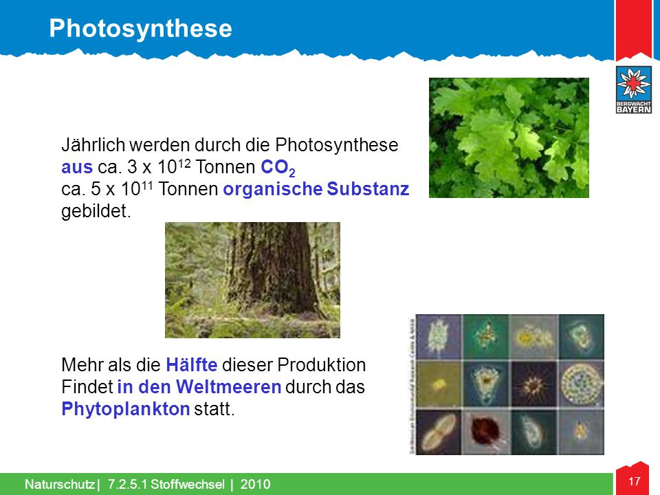 Photosynthese Jährlich werden durch die Photosynthese