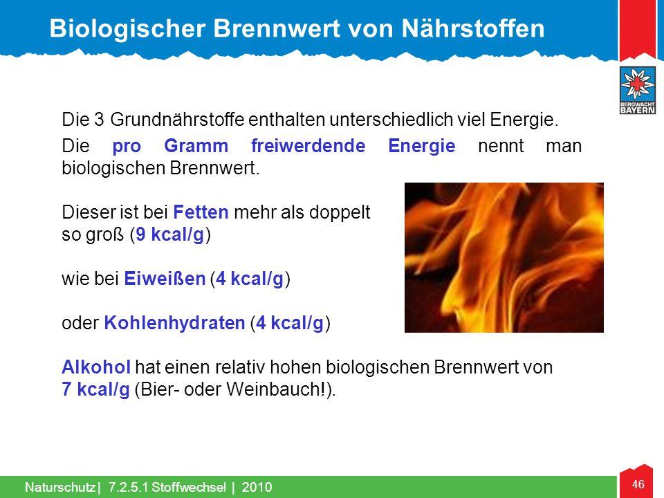 Biologischer Brennwert von Nährstoffen
