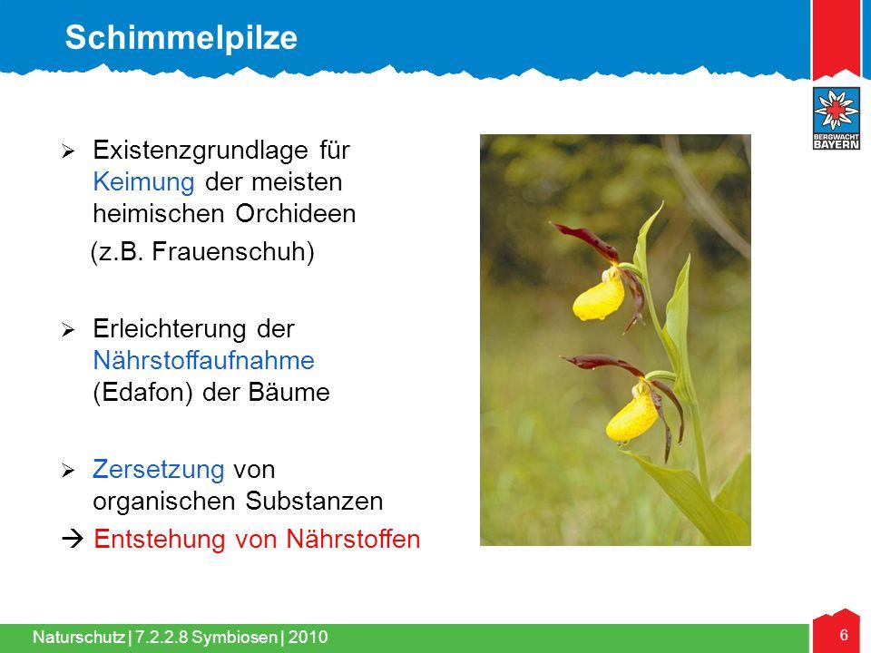 Schimmelpilze Existenzgrundlage für Keimung der meisten heimischen Orchideen. (z.B. Frauenschuh)