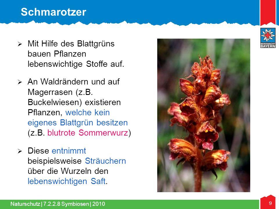 Schmarotzer Mit Hilfe des Blattgrüns bauen Pflanzen lebenswichtige Stoffe auf.